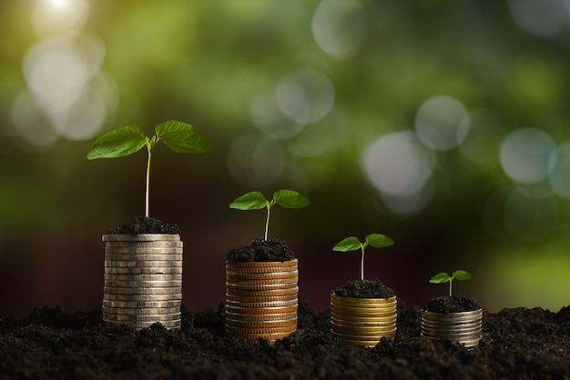 Étape de croissance des plantes avec une pile de pièces sur la saleté et le soleil dans la lumière du matin de la nature. concept d'économiser de l'argent.