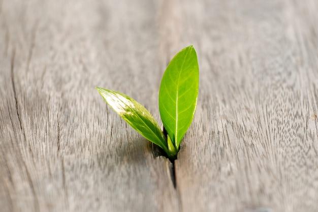 Étape de plus en plus jeune plante dans le jardin avec la lumière du soleil. concept écologique. croissance de l'entreprise jusqu'à concept