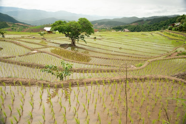 Les étapes de l'agriculture à flanc de colline dans le nord de la thaïlande