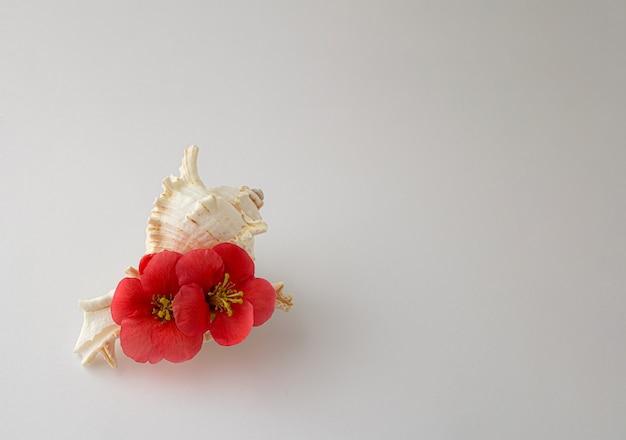 Été 2021. coquillage blanc avec fleur tropicale rouge sur fond blanc. élégant minimal