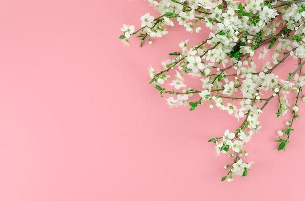 L'été arrive concept de fond rose avec des branches de fleurs blanches au coin.