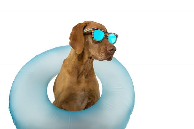 Été de chien à l'intérieur d'une piscine flottante gonflable.