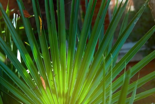 Été, fond de feuilles de palmier vert.