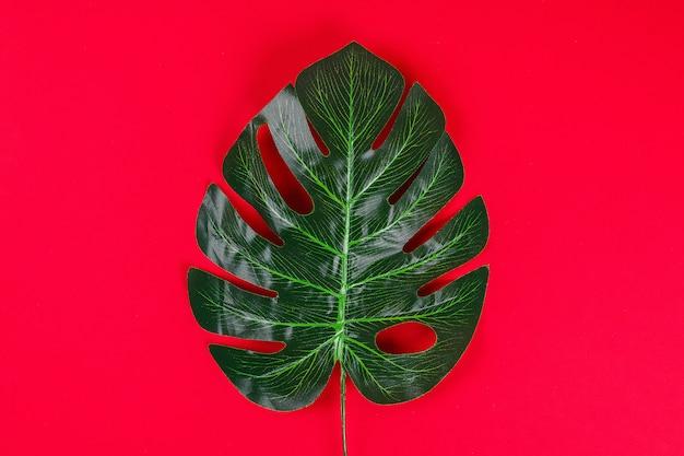 Été idées concept bordure de cadre noir blanc feuille tropicale sur fond rouge, espace copie vue de dessus