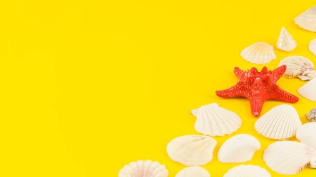Étoile de mer avec beaucoup de coquillages sur la table jaune