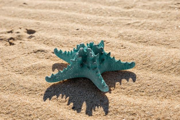 Étoile de mer bleue sur la plage de sable fin