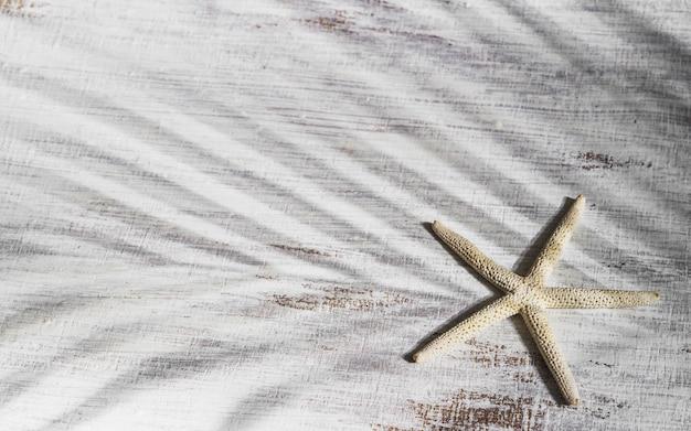 Étoile de mer sur bois rouillé avec palmier tropical laisse ombre.