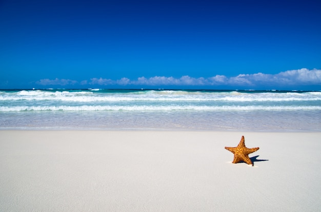 Étoile de mer des caraïbes sur la plage de sable