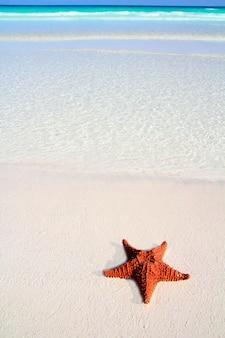 Étoile de mer des caraïbes tropical sable turquoise plage