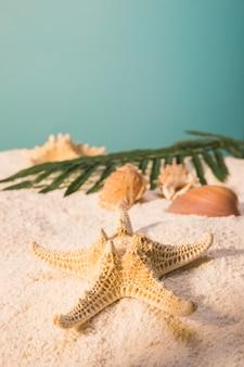 Étoile de mer avec des coquillages et des feuilles sur la plage de sable fin