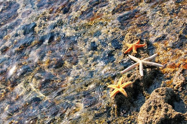 Étoile de mer et coquillages sur la plage ensoleillée. fond de vacances d'été