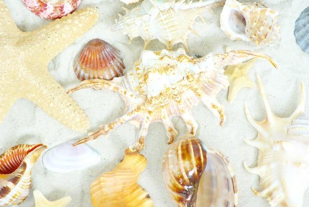 Étoile de mer et coquillages sur la plage