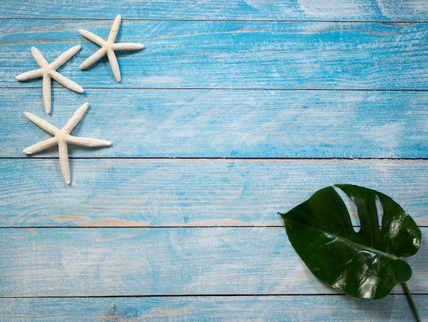 Étoile de mer sur fond bleu