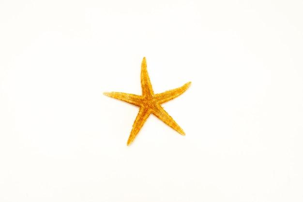 Étoile de mer isolé sur fond blanc