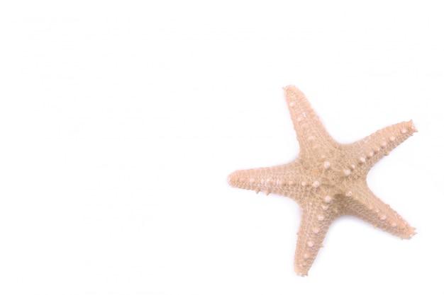 Étoile de mer isolée sur blanc.