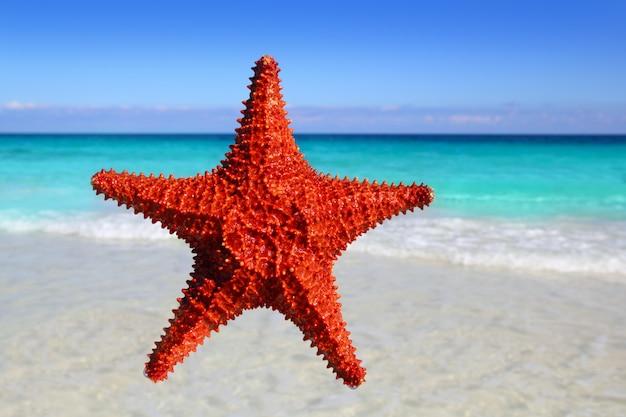 Étoile de mer isolée sur une plage turquoise tropicale