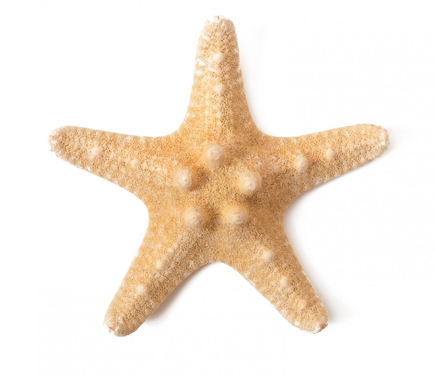 Étoile de mer isolée