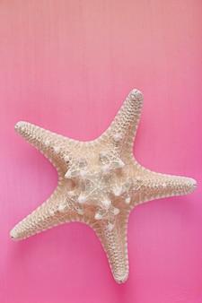 Étoile de mer sur lilas pâle
