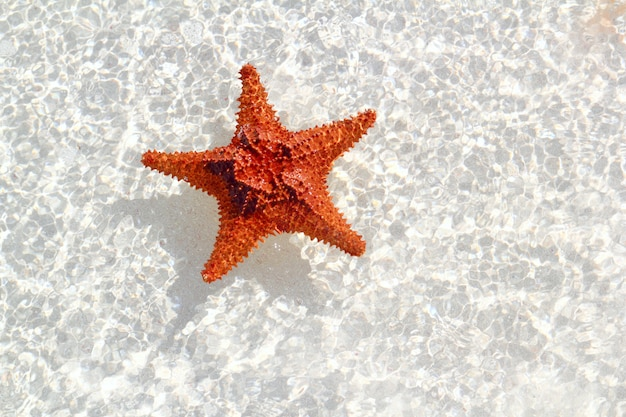 Étoile de mer orange en eau peu profonde ondulée