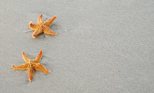 Étoile de mer orange sur une plage de sable