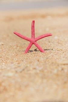 Étoile de mer sur la plage sur le sable