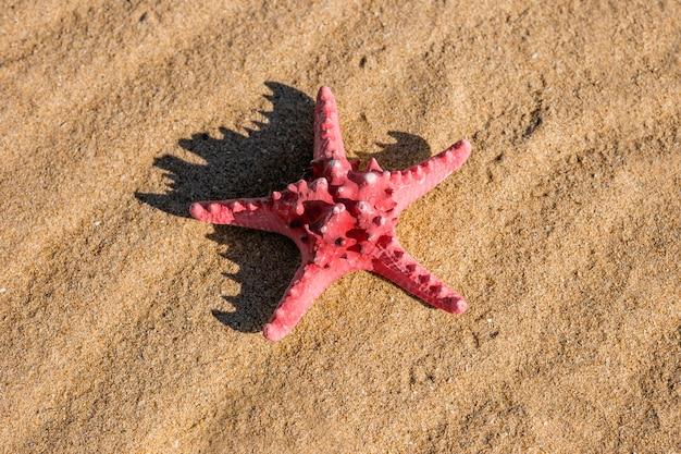Étoile de mer rose sur la plage de sable fin