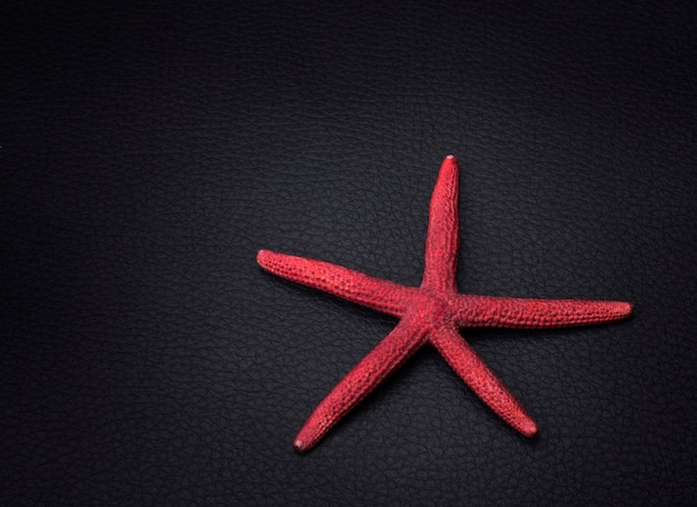 Étoile de mer rouge sur fond noir