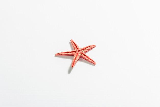 Étoile de mer rouge unique isolée sur blanc.