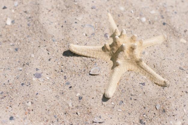 Étoile de mer sur le sable