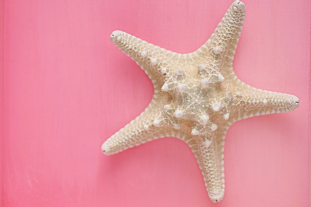 Étoile de mer sèche sur rose
