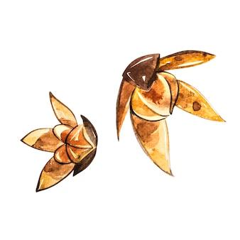 Étoiles d'anis isolés sur blanc. illustration aquarelle.