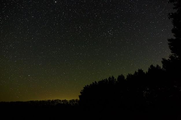 Étoiles dans le ciel la nuit. espace extra-atmosphérique au-dessus de la forêt