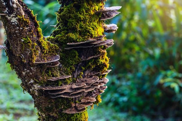 Étrange de champignon dans la forêt tropicale.