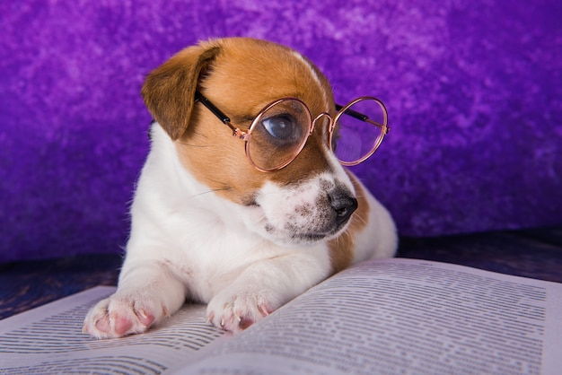 Un étudiant fatigué de chien mignon lisant un livre pour enseigner des leçons s'endort