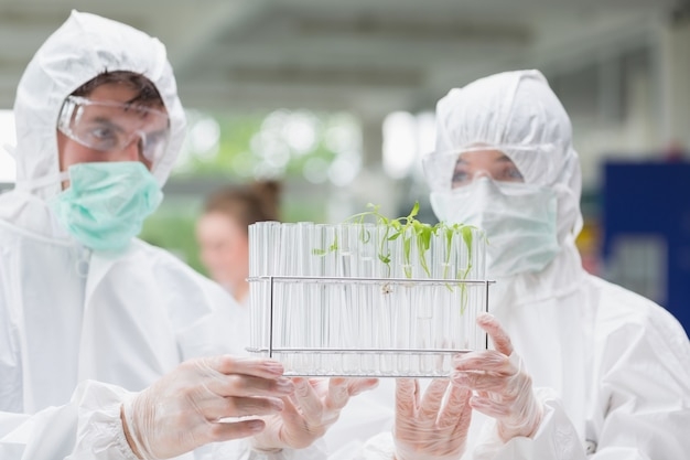 Étudiants examinant des éprouvettes contenant des semis