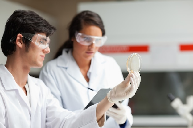 Étudiants en sciences regardant une boîte de pétri dans un laboratoire