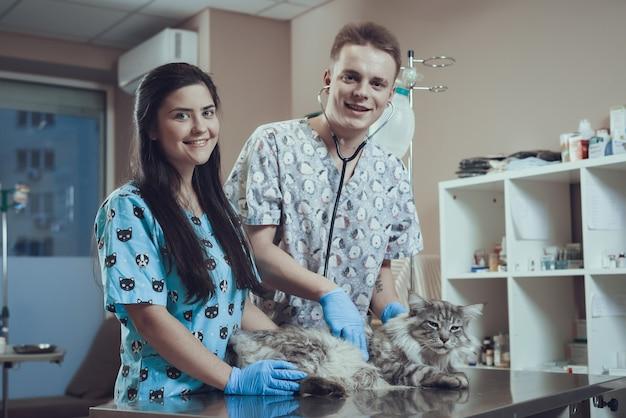 Étudiants vétérinaires heureux examinant un chat à fourrure en clinique