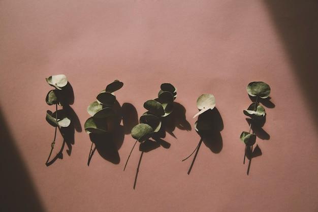 Eucalyptus sur fond rose