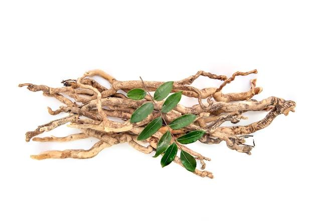 Eurycoma longifolia jack, racines séchées et feuilles vertes isolées sur fond blanc, vue de dessus, mise à plat.