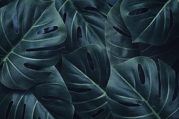 Événement de palmier contemporain dramatique et motif de feuille de monstera. mise à plat. notion de nature.
