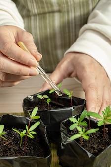 Expérience pour améliorer la croissance des semis de fleurs en gros plan une pipette avec de l'engrais dans les mains de la femme