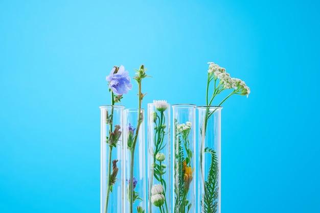 Expérience scientifique - fleurs dans des tubes à essai. plante fraîche verte en laboratoire sur fond bleu.