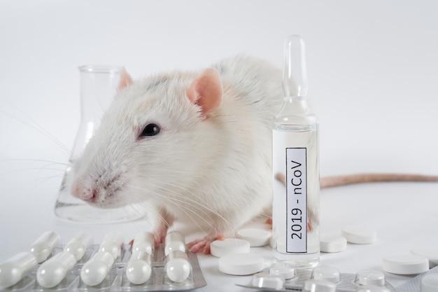 Expérimentez avec un rat de laboratoire, une souris pour trouver un vaccin contre le coronavirus en laboratoire.