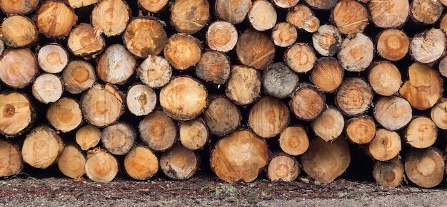 Exploitation forestière, déforestation de la planète. journaux empilés. scène de pièces empilées. pino de valsain à ségovie, castille et leon.