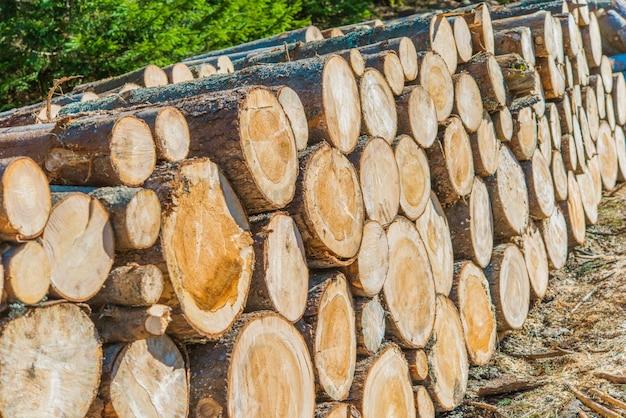 L'exploitation forestière du bois d'oeuvre