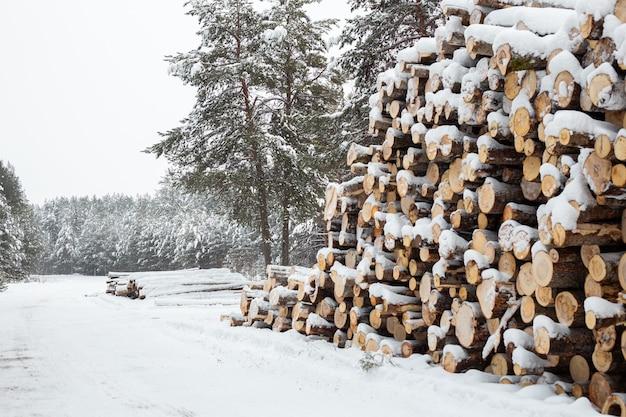 Exploitation forestière d'hiver dans la forêt de neige