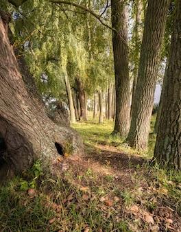 Explorer les sentiers de randonnée