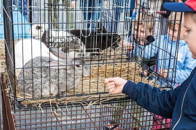 Exposition d'animaux de compagnie en milieu rural les enfants nourrissent des lapins assis dans une cage