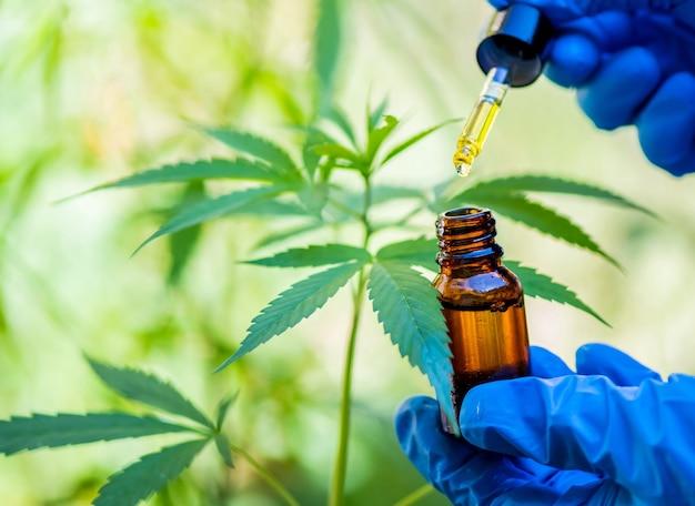 Extrait de chanvre, huile de cbd thc, bourgeon de fleur de cannabis à spectre complet