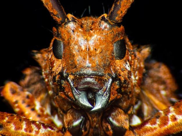 Extrême macro, frelon européen (vespa crabro) occupé à construire un nid de frelons.